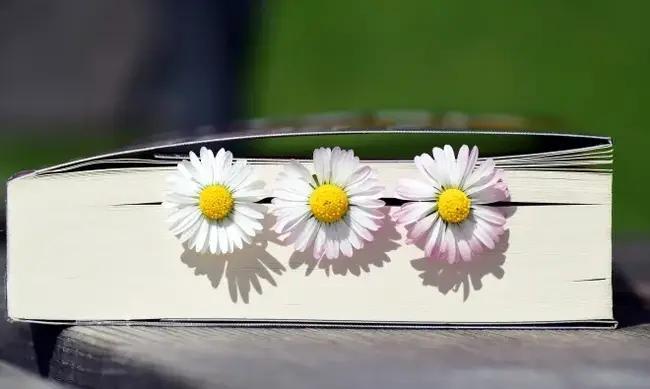 Mutlaka Okuması Gereken 100 Şiir Kitabı